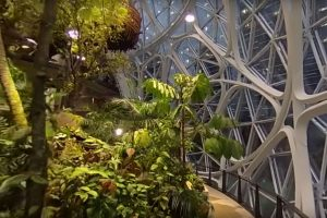 Amazon biosphere with Ricoh Theta V
