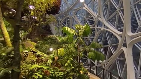 Amazon biosphere with Ricoh Theta V