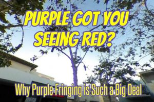 Purple fringing