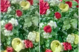 Details: before enhancement (left) and after AI Image enhancement (right). Photo by Ricoh Tours